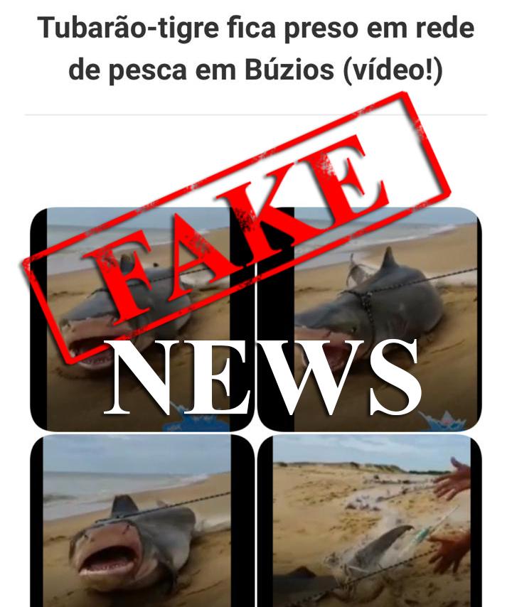 Fake News Tubarão